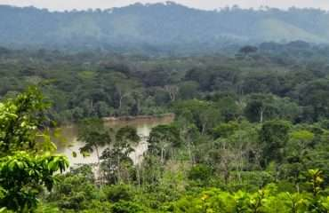Panamas Jungles