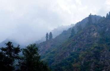 Cloud Forrests