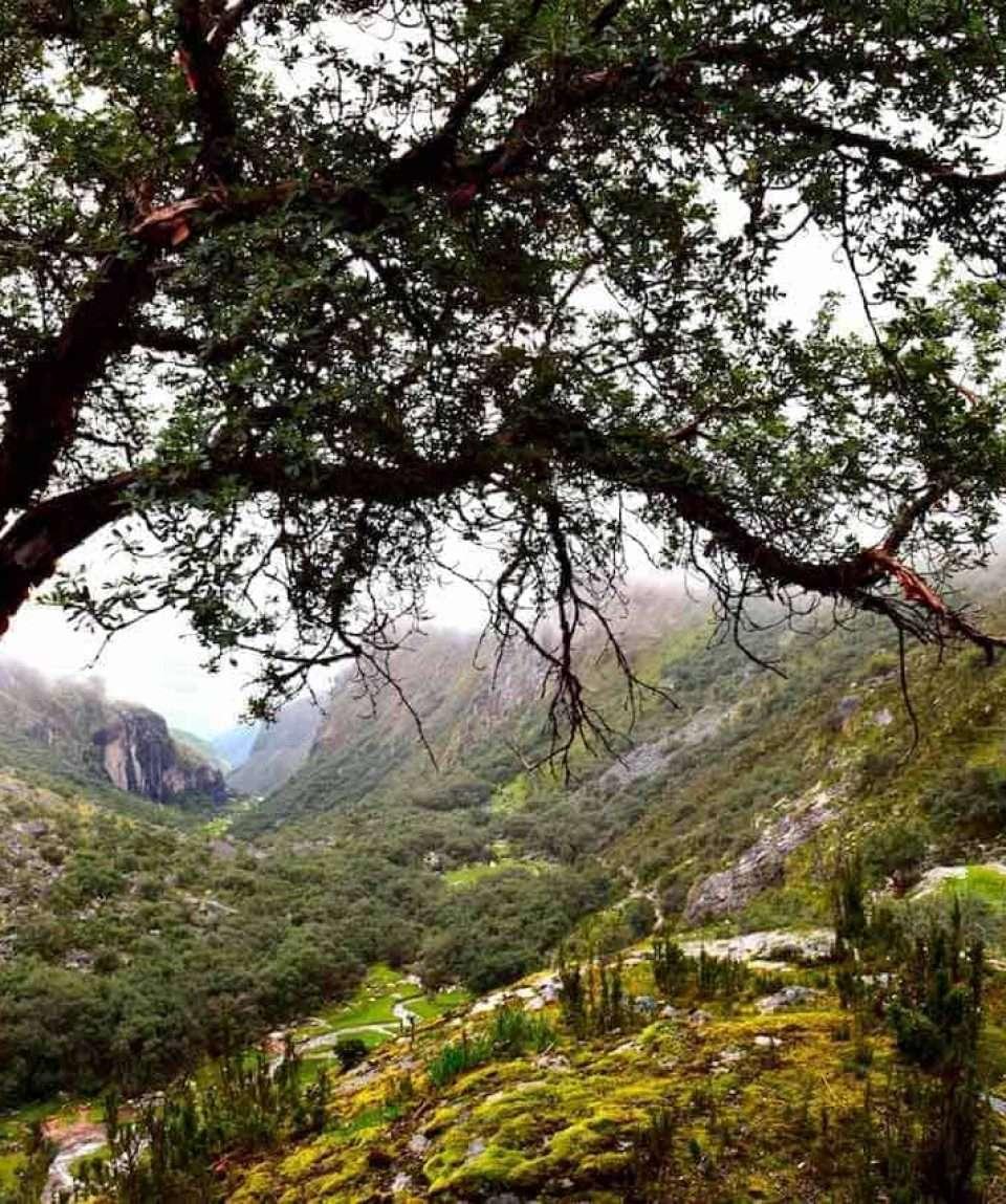 Lush Highlands