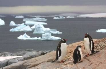 Penguins, Antarctic Peninsula