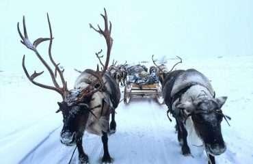 Reindeer Power