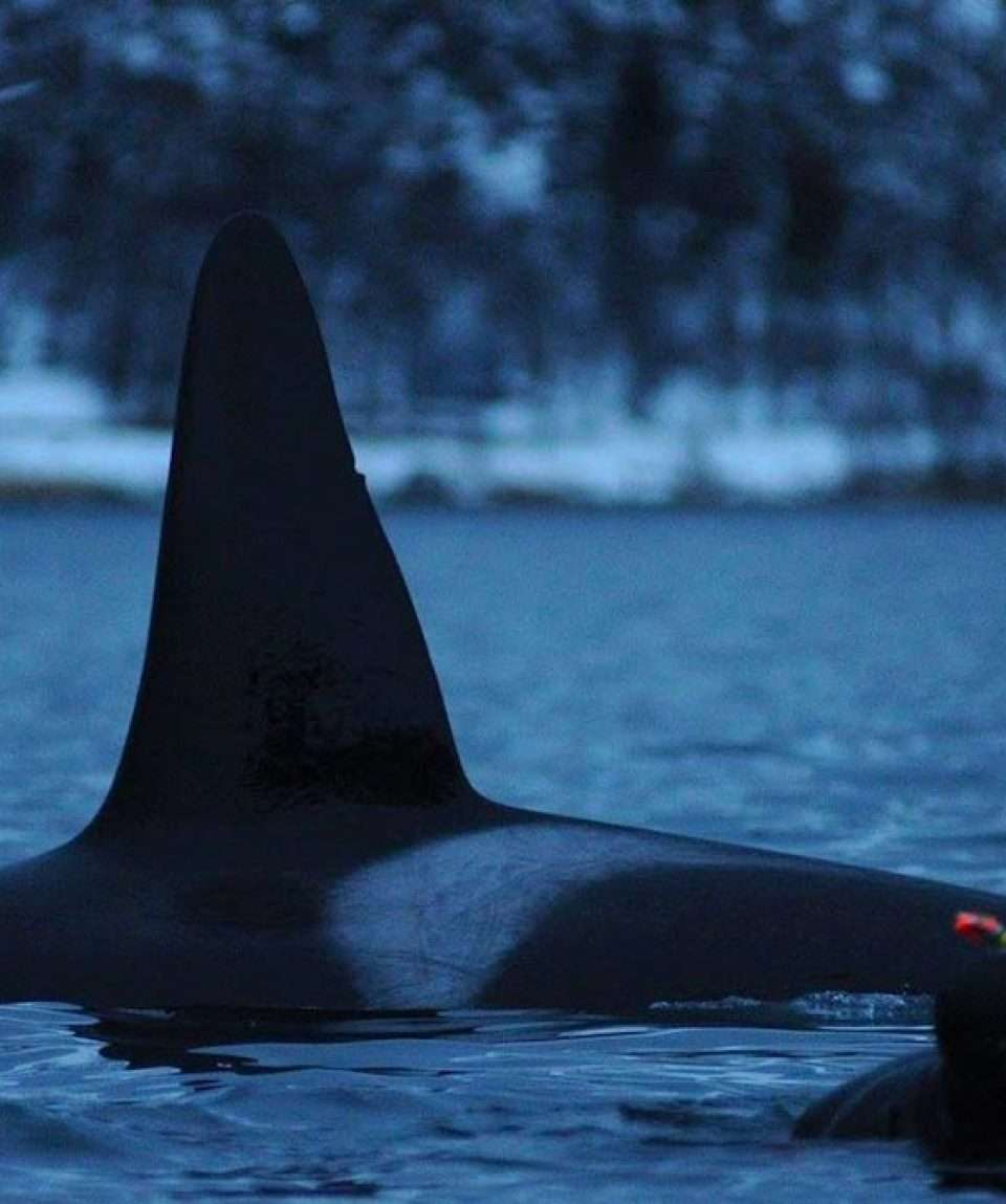 Experience the Orcas