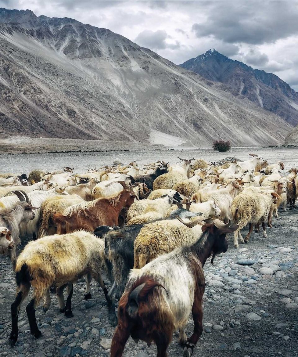 Hiking with Goats, Pakistan