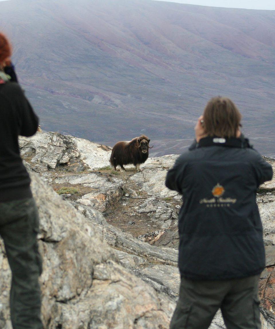 Greenland Wildlife