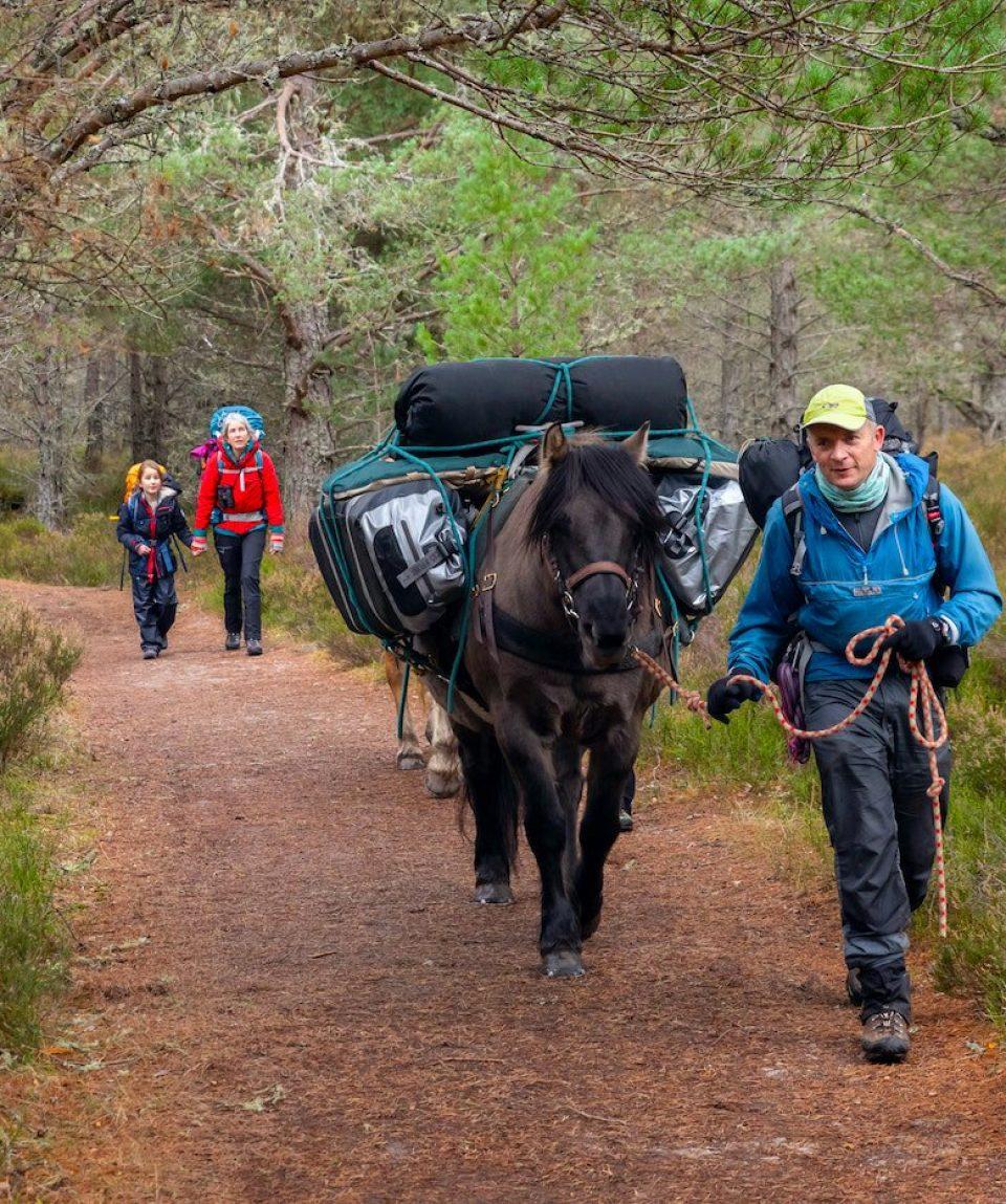 Packhorse Trekking